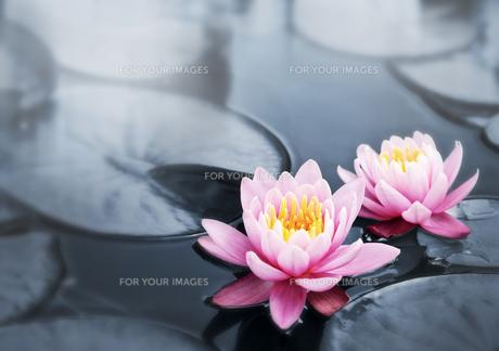 plants_flowersの写真素材 [FYI00808995]