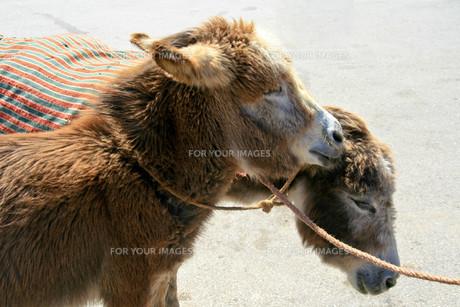 useful_animalsの写真素材 [FYI00809089]