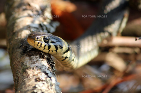reptiles_amphibiansの写真素材 [FYI00809162]