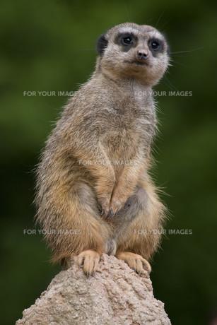 mammalsの写真素材 [FYI00809337]