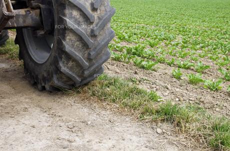 tractor detail fieldの素材 [FYI00809805]