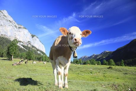 useful_animalsの写真素材 [FYI00809902]