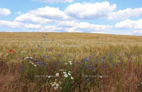 grass_fieldsの素材 [FYI00810168]