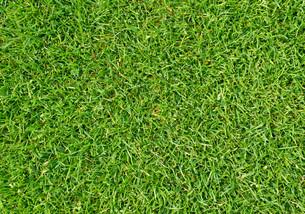 grassesの写真素材 [FYI00810277]
