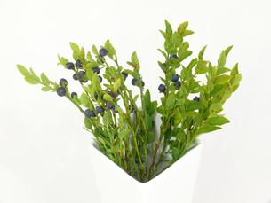 blueberry twigsの素材 [FYI00810486]