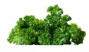 parsleyの写真素材 [FYI00810505]