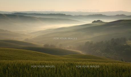 morning fogの素材 [FYI00810890]