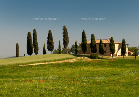tuscanyの素材 [FYI00810895]