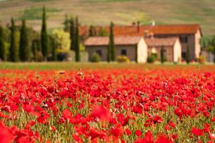 tuscanyの素材 [FYI00810899]