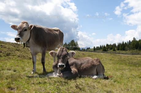 useful_animalsの写真素材 [FYI00811016]