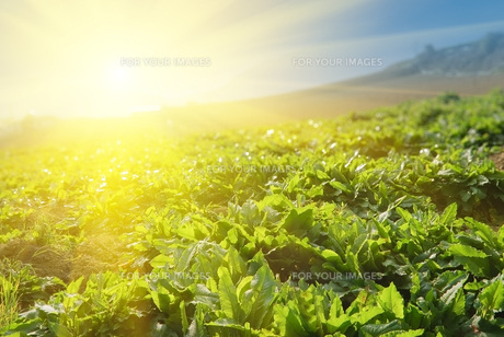 nature_environmentの素材 [FYI00811541]