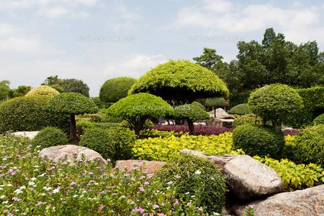 japanese gardenの写真素材 [FYI00811778]