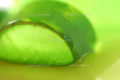 aloe vera gel series cosmeticsの素材 [FYI00812015]