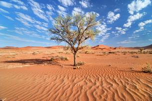 namib desertの写真素材 [FYI00812069]