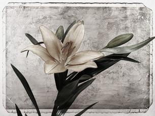 plants_flowersの素材 [FYI00812274]
