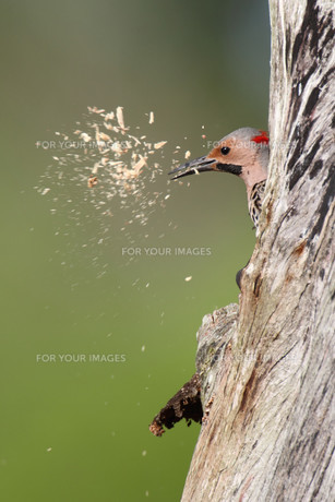 birdの写真素材 [FYI00812298]