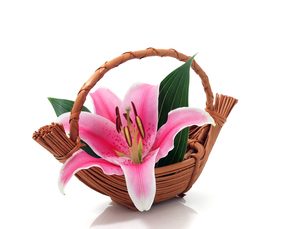 flowerの素材 [FYI00812301]