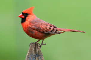 birdの写真素材 [FYI00812439]