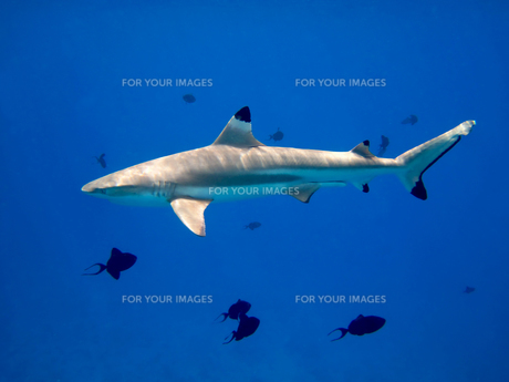 fishes_crustaceansの素材 [FYI00812524]