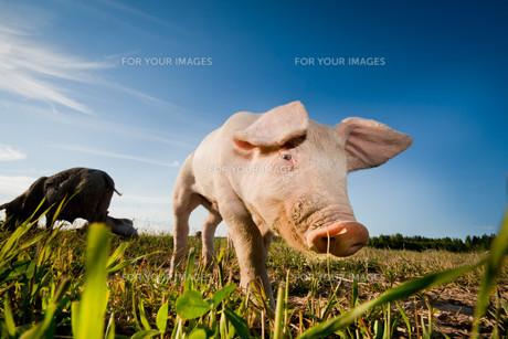 useful_animalsの写真素材 [FYI00812568]