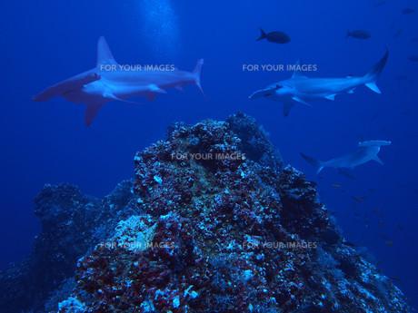 nature_environmentの写真素材 [FYI00813021]