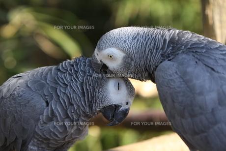 birdの写真素材 [FYI00813091]