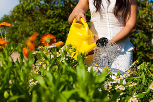 gardening in summer - woman pouring flowersの写真素材 [FYI00813103]