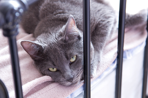 home_animalsの写真素材 [FYI00813295]
