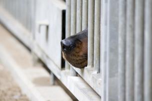 animalsの写真素材 [FYI00813684]