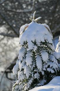 winter in the parkの素材 [FYI00814088]