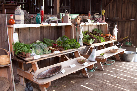 fresh vegetables in an old wooden barn on the organic farmの写真素材 [FYI00814197]