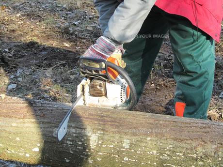forest workの素材 [FYI00814205]