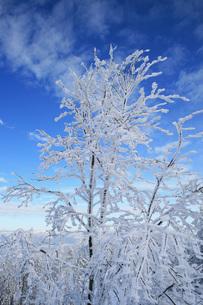winter in the alpsの写真素材 [FYI00814217]