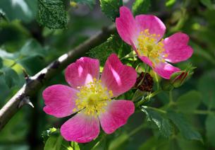 plants_flowersの素材 [FYI00814223]