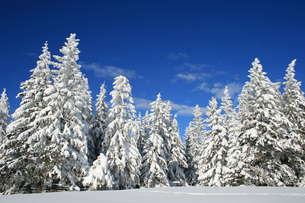 winter in the alpsの写真素材 [FYI00814234]