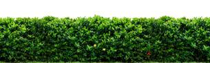 plants_flowersの素材 [FYI00814307]