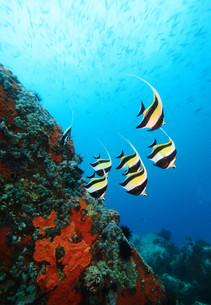 fishes_crustaceansの写真素材 [FYI00814793]