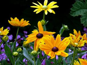 flowers 2の素材 [FYI00814837]