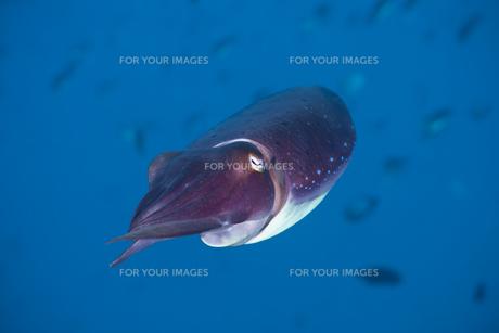 underwater_worldの素材 [FYI00815362]