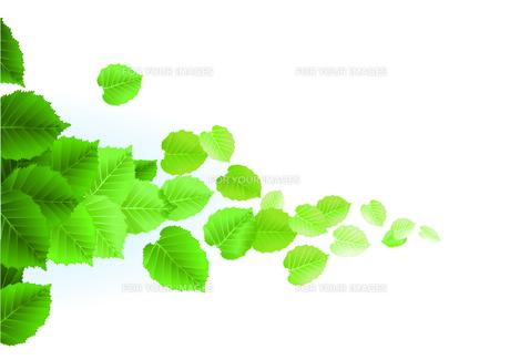 fresh leaves on white backgroundの素材 [FYI00815827]
