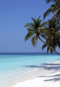 a beautiful dream beach in the maldivesの写真素材 [FYI00815877]
