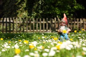 meadowの写真素材 [FYI00815882]
