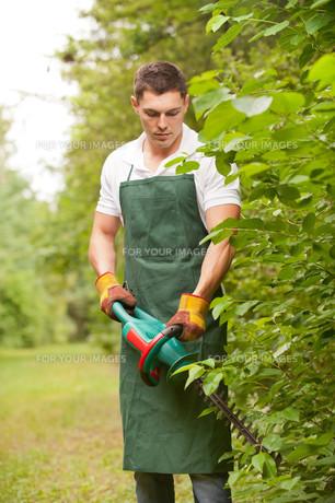 young gardenerの素材 [FYI00816089]