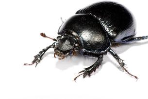 black bug in upper left cornerの素材 [FYI00817053]
