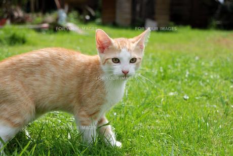 red kitten in the gardenの素材 [FYI00817290]
