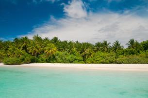 tropical coastの写真素材 [FYI00817947]
