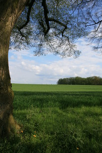 meadow in springの写真素材 [FYI00818036]