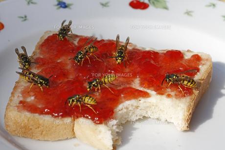 wasps on toastの素材 [FYI00818186]