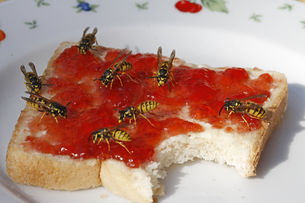 wasps on toastの写真素材 [FYI00818186]