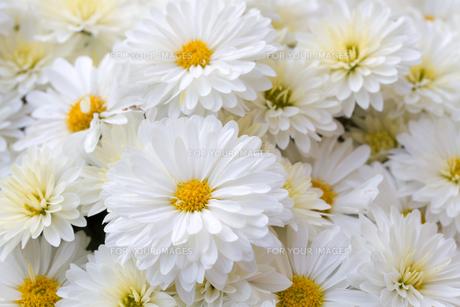 bloomの写真素材 [FYI00819591]